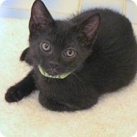 Adopt A Pet :: WALTER - HILLSBORO, OR