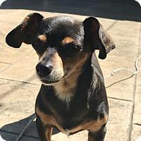 Adopt A Pet :: Molly - Silverdale, WA