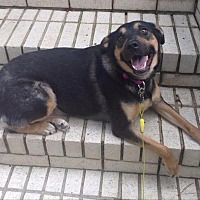 Adopt A Pet :: Binky - Little Rock, AR
