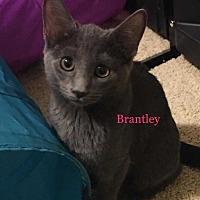 Adopt A Pet :: Brantley - Woodstock, GA