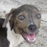 Adopt A Pet :: Mercy Helen~ A LOVE! - St Petersburg, FL