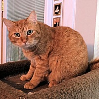 Adopt A Pet :: MyBoo - Petersburg, VA