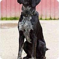 Adopt A Pet :: Dublin - Portland, OR