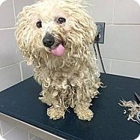 Adopt A Pet :: Winnie - Loveland, CO
