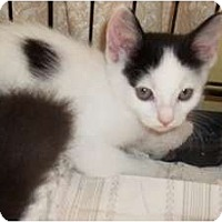 Adopt A Pet :: Meadow - Acme, PA