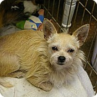 Adopt A Pet :: Livey - Brooksville, FL