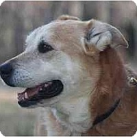 Adopt A Pet :: Butters - Conyers, GA