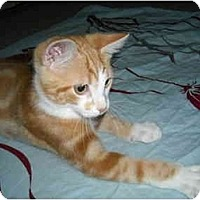 Adopt A Pet :: Chester - Arlington, VA