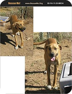 Hound (Unknown Type) Mix Dog for adoption in Olympia, Washington - Sophie