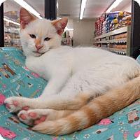 Adopt A Pet :: Chap - Warren, OH