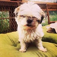 Adopt A Pet :: Barkley - San Diego, CA