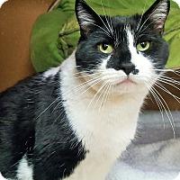 Adopt A Pet :: Tinker - Colorado Springs, CO
