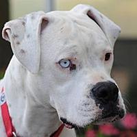Adopt A Pet :: Tristan - Alameda, CA