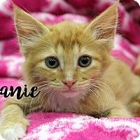 Adopt A Pet :: Joanie - Wichita Falls, TX