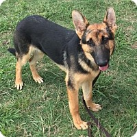 Adopt A Pet :: Titus - McKinney, TX