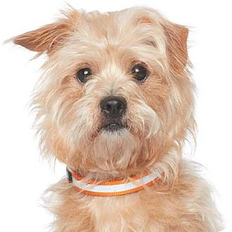 Terrier (Unknown Type, Medium) Mix Dog for adoption in Los Angeles, California - Dave Franco