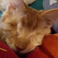 Adopt A Pet :: Severide - Alpharetta, GA