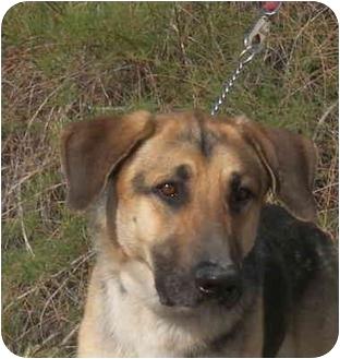 German Shepherd Dog Mix Dog for adoption in Las Vegas, Nevada - Costello