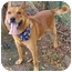 Photo 3 - German Shepherd Dog/Chow Chow Mix Dog for adoption in Huntington, New York - Higgins