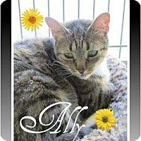 Adopt A Pet :: Allie - Mobile, AL