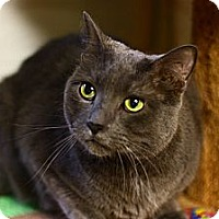 Adopt A Pet :: Reed Richards - Lombard, IL