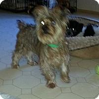 Adopt A Pet :: Baxter - Bowie, TX