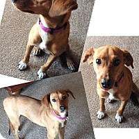 Adopt A Pet :: Libby - Lawrenceville, GA