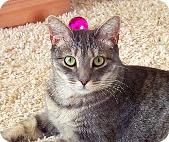 Domestic Shorthair Cat for adoption in Palmdale, California - Jazzy