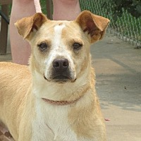 Spitz (Unknown Type, Small) Mix Dog for adoption in Greenville, Rhode Island - Dexter