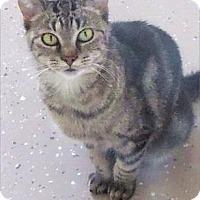 Adopt A Pet :: Thomasina - Waupaca, WI