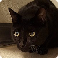 Adopt A Pet :: Spence - Grayslake, IL