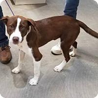 Adopt A Pet :: Gunner - Wimberley, TX