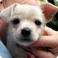 Adopt A Pet :: Sally - Salem, OR