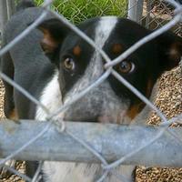 Adopt A Pet :: Rosco - Opelousas, LA