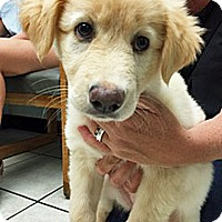 Adopt A Pet :: Cricket - BIRMINGHAM, AL