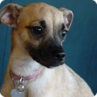 Adopt A Pet :: Giselle - Sacramento, CA