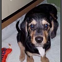 Adopt A Pet :: Mylia - DeForest, WI