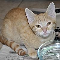 Adopt A Pet :: Nala- Loving! - New Smyrna Beach, FL