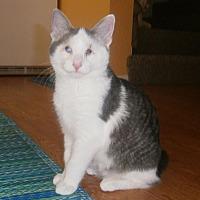 Adopt A Pet :: Breezy - Overland Park, KS