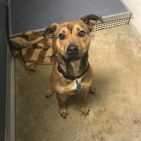 Adopt A Pet :: Butch - Fort Dodge, IA