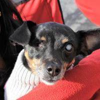 Adopt A Pet :: Muriel - San Francisco, CA