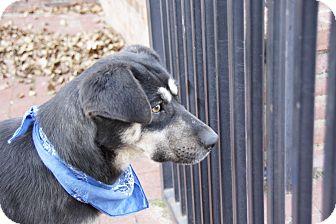 Shepherd (Unknown Type) Mix Dog for adoption in Hatifeld, Pennsylvania - Andi