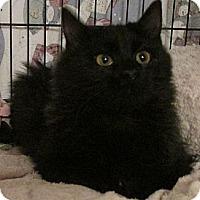 Adopt A Pet :: Satin - Acme, PA