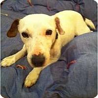 Adopt A Pet :: Libby in Midland - Midland, TX