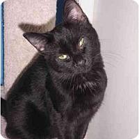 Adopt A Pet :: Gemini - Warren, MI