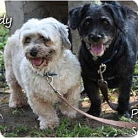Adopt A Pet :: Teddy - I don't shed! - Vancouver, BC