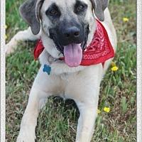 Adopt A Pet :: Scooby - Redding, CA