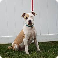 Adopt A Pet :: Payne - Shelby, MI