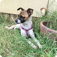 Adopt A Pet :: Emily - Denver, CO