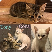 Adopt A Pet :: ​Tony and Cora - Orland Park, IL